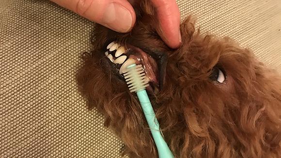 歯磨きをしようとしても嫌がって暴れて全然できない…
