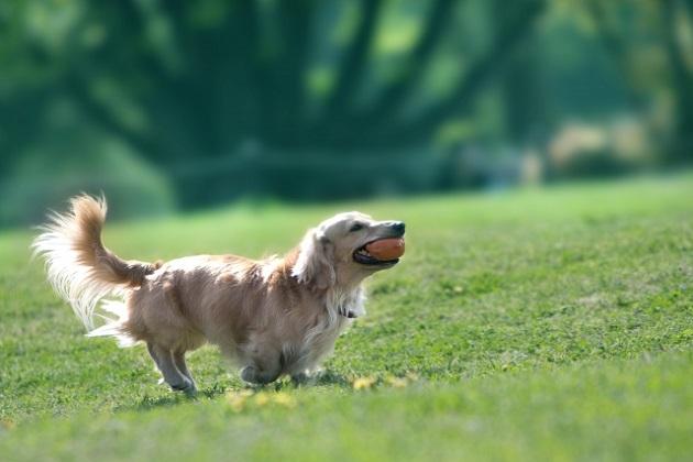 犬にサプリメントを与えるメリット