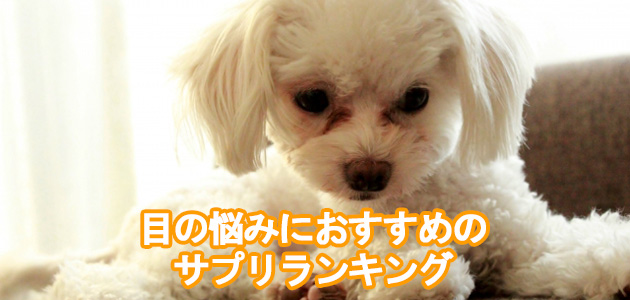 愛犬の目の悩みにおすすめのサプリランキング